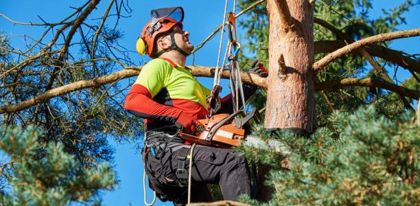 Things You Need To Know For Hiring The Best Tree Service